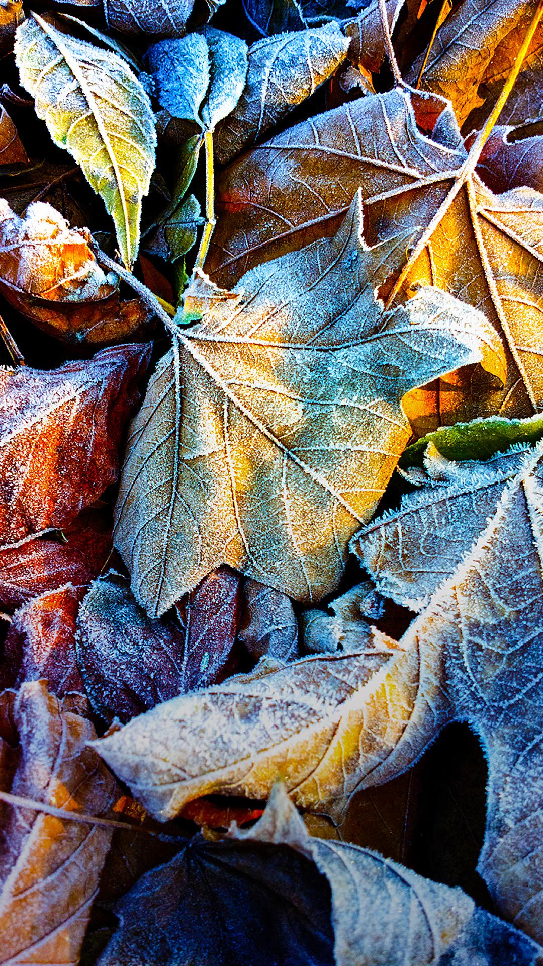 Full Hd Nokia Lumia 1520 Wallpapers on Autumn Word Search
